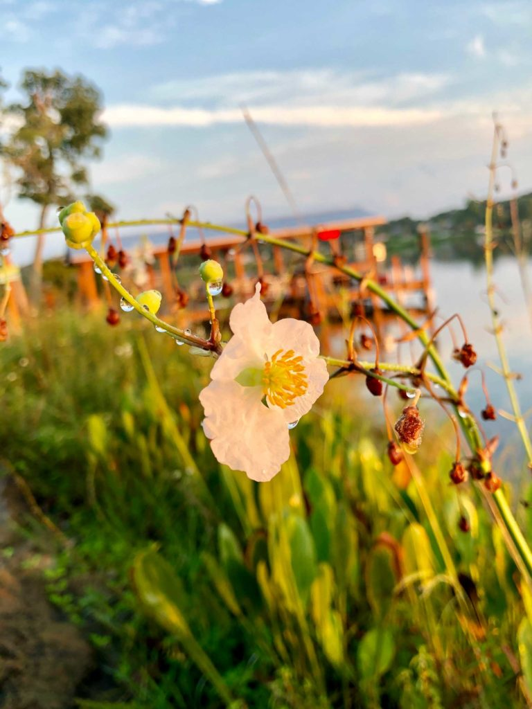 Dew on flower by lake by Audrey Carter