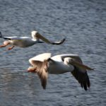 Flight-Formation-Mike-Coltman
