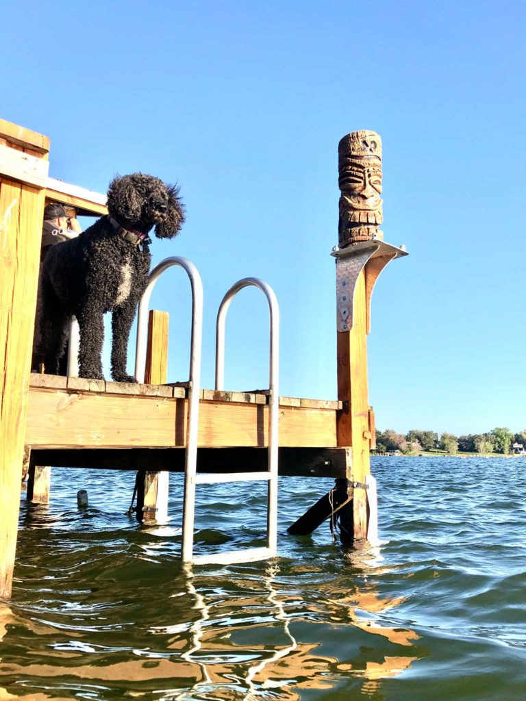 Dog on deck at a lake